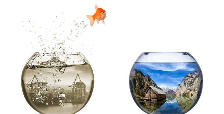 fisch springt vom dreckigen industriegebit in die Natur